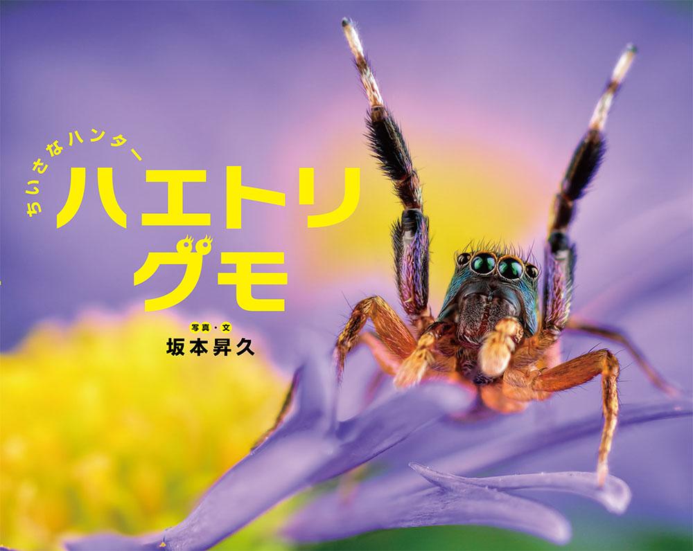 ちいさなハンター ハエトリグモ